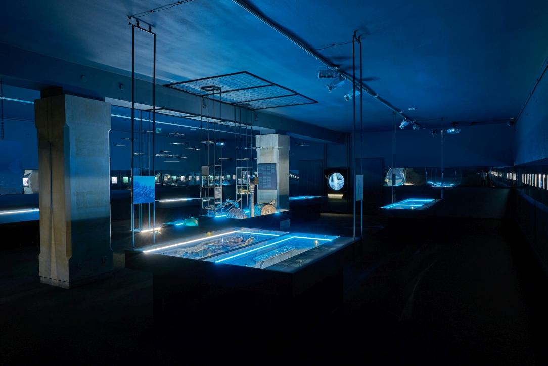 """Wystawa """"Do DNA. 50 lat archeologicznych badań podwodnych Narodowego Muzeum Morskiego w Gdańsku"""", fot. Dariusz Kula Images"""